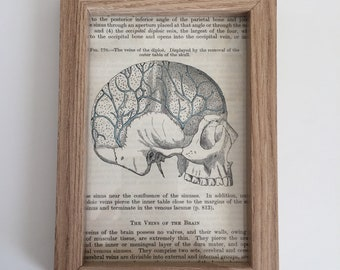 Antique Anatomical Human Skull Vintage Lithograph, print from 1942 Gray's Anatomy, framed art