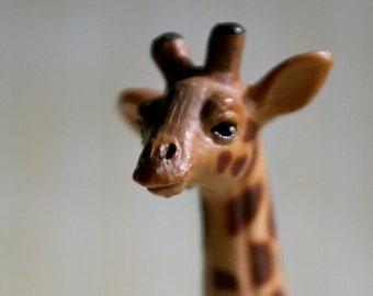 Yes.... - Giraffe - Photograph - Various Sizes