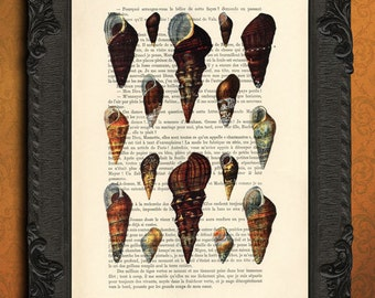 sea shell art print, trumpet shell collection on dictionary page, freshwater snail illustration red rimmed melania wall art