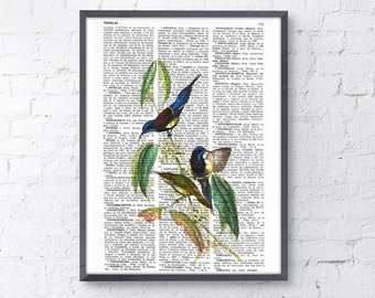 Hummingbirds n 04 Print on Vintage Dictionary Book altered art dictionary page illustration book print art ANI115