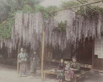 Wisteria Blossoms Framed Photo - FREE SHIPPING