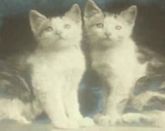SALE Vintage RPPC (Cats/Kittens)