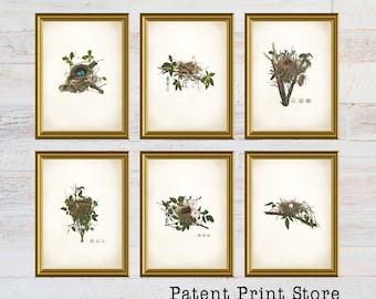 Bird Nest Print Set. Bird Prints. Bird Egg Prints. Wall Art. Living Room Wall Art. Bedroom Art. Dining Room. Audubon Bird Prints. 134