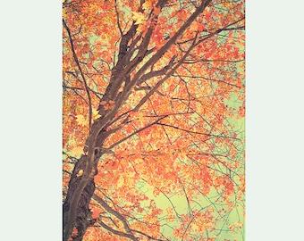 Autumn Landscape, Fall Decor, Red Tree Photography,  Rustic Decor, Forest Art, Woodland Art