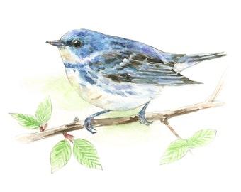 Cerulean Warbler watercolor painting - bird watercolor painting - 5x7 inch print - 0065