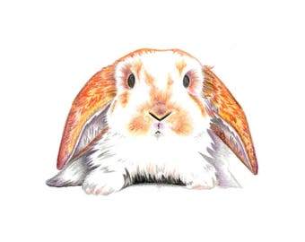 Bunny - 5 x 7 in greeting card
