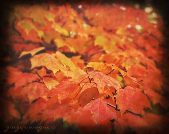 Herbst-Naturfotografie - Fiery Leaves - 8 x 10 Fine Art Print - Herbst fallen Blätter orange gelb gold Ttv schwarze Wand Kunst Wohnkultur