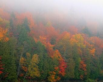 Fall Foliage, Autumn Landscape, Autumn Photograph, Nature Photography, Autumn Trees, Fine Art Print, Nature Photography, Nature Print