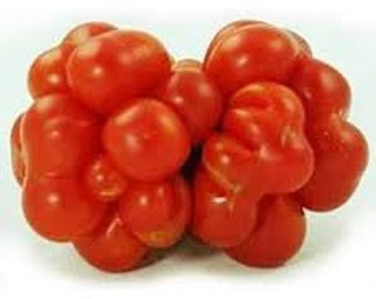 Voyage Tomato seeds