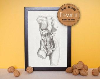 "Vintage anatomical illustration of female viscera of abdominal area - fine art print, art of anatomy,  8""x10"" ; 11""x14"", FREE SHIPPING 150"