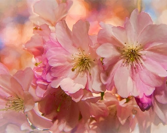 Spring Bloom Image, Flower Photography, Cherry Blossoms Image,