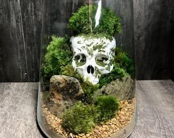 No Bones About It Moss Terrarium- Fully Assembled