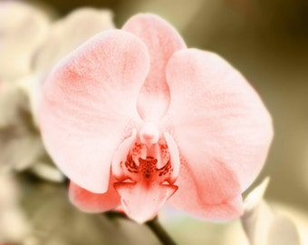 Orchid Art Print - Pink Sepia Beige Pastel Soft Spring Home Decor Wall Art Flower Floral Photograph