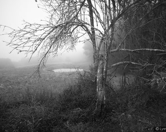 "Black and White Photography -  a tree and pond in winter fog, landscape photography, home decor, nature wall prints, tree photo - ""Sorrow"""