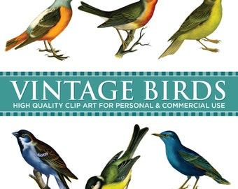 VINTAGE BIRDS - Digital Clip Art Graphics for Personal or Commercial Use