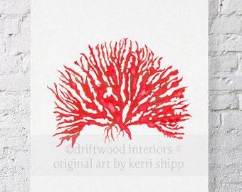 Sea Coral in Ruby Print IV - 11x14
