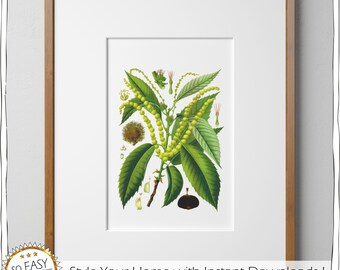Vintage print, chestnut, Printable wall art, chestnut Print, Wall Print, Nut, Digital Print, Home deko, Tree print, Check out dicount-Code!