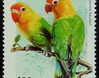 Fischer's lovebird Parrot Agapornis fischeri -Handmade Framed Postage Stamp Art 11880