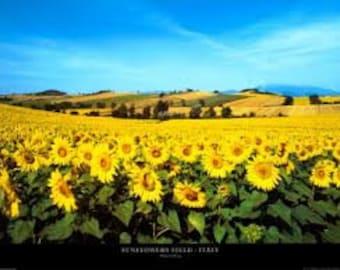 6 pack Sunflower Soy Votives