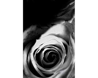 Abstract Photography, Rose Wall Art, Flower Photography, Black and White Decor, Rose Print