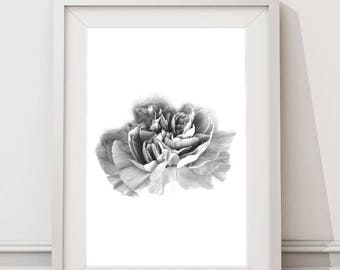 Carnation Flower | Large Art Print Nordic Kitchen Printable Art Minimalist Botanical Nature Black and White Photography Prints Nordic Design