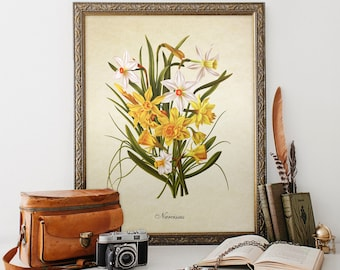 Botanical Print Narcissus Print Home Decor Narcissus Natural History Flower Narcissus Floral Print Narcissus Bouquet Reproduction FL043