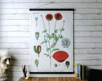 Poppy Botanical Chart / Vintage Pull Down Chart Reproduction / Canvas Fabric Print / Oak Wood Poster Hangers and Brass / Wall Hanging