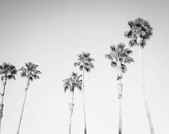 Black & White Palm Tree Art, California Beach Photography, California print, Los Angeles wall art, Surf Decor, Bohemian Landscape Large