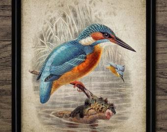 Vintage Kingfisher Print - Kingfisher Illustration - Kingfisher Decor - Digital Art - Printable Art - Single Print #485 - INSTANT DOWNLOAD