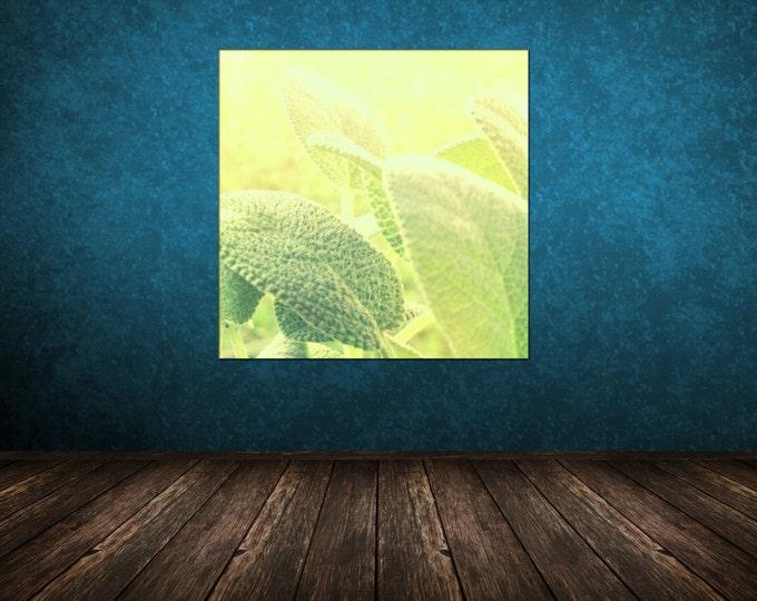 Sage Herb Detail, Sunshine Macro Fine Art Photography, 8x8 10x10 12x12 20x20  - Leaves Garden Atmosphere
