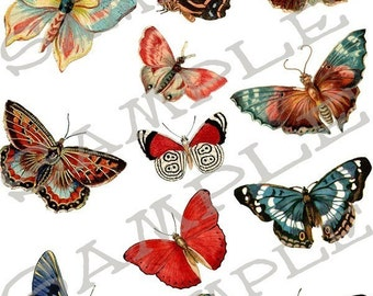 Butterfly collage sheet 8B  Single PNG Images