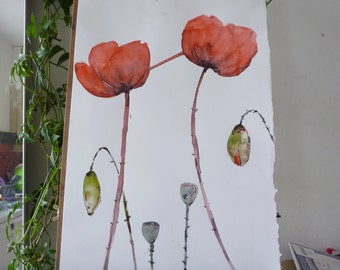 original watercolor painting: poppy, poppy Red