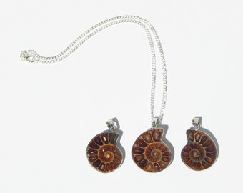 Ammonite Necklace, Ammonite Fossil Necklace, Fossil Necklace, Ammonite Pendant, Nautilus Necklace, Nautilus Fossil, Nautilus Necklace