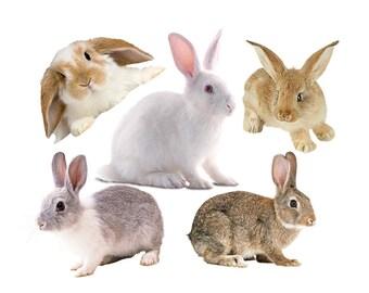 Bunny rabbit overlay photo animal photoshop png