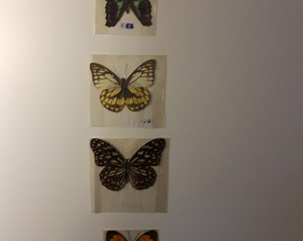 Hand Pressed Butterflies from Nature