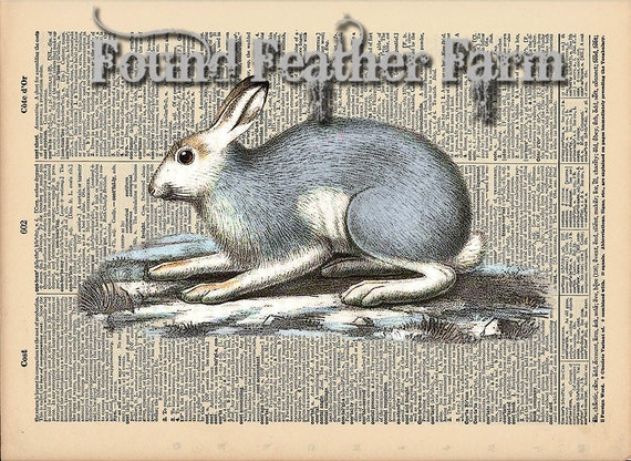 "Vintage Antique Dictionary Page with Antique Print ""Snow Bunny"""