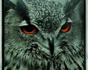 Owl  - Gufo PRINT - A4 - signed