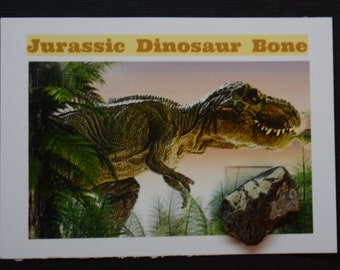 Dinosaur Bone Fossil *** Great Collector's Piece for Youth **** ETD004