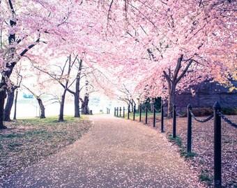 Kirschblütenfest drucken - Washington DC Foto - Kirschblüten Blumen - professionelle Fotografie, Wandkunst, rosa Blüten
