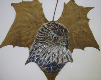 art,print,digital,leaf,drawing,animal,hand crafted, nature, hawk