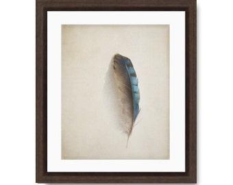 Modern Farmhouse Decor, Feather photo, blue jay feather print, nature photo, nature print, feather photography, feather art print,