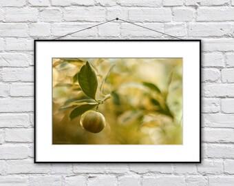Lemon Print, Tropical Art Print, Yellow Kitchen Decor, Kitchen Art, Lemon Photography, Kitchen Decor, Kitchen Art Print, Kitchen Wall Decor