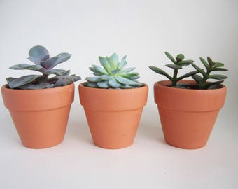 5 terracotta mini plant flower pots with drainage hole - 3cm, 5cm, 7cm