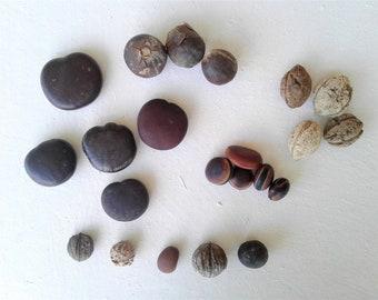 Drift Seed / Sea Bean Assortment, 22 Pieces