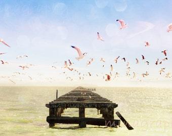 "Large Beach Photography San Francisco California // Abandoned Pier // Seagulls Print // Modern Art Print Living Room Art - ""Berkeley Marina"""