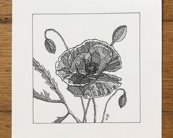 Poppies - pen and ink illustration
