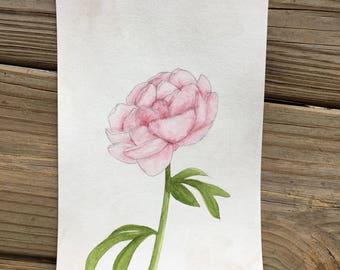 Pink Peony Original Watercolor Painting OOAK 365 Days of Art