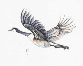 Canadian Goose Watercolour Print