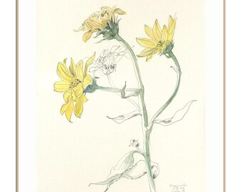 Yellow Flowers PRINT - pencil and watercolour after yellow flowers - botanical drawing - floral wall art by Catalina