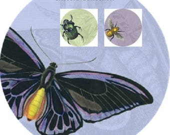 Insecta Collection Set of 3- Butterfly, Beetle, Bumble Bee 10' inch Decorative Melamine Plates